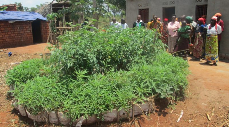 a kitchen garden managed by a beneficiary member of a peasant organization (OP) (Twiyunge) during the dry season